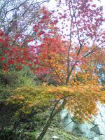 1小豆島の紅葉はマダマダ綺麗2