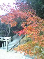 1小豆島の紅葉はマダマダ綺麗1