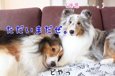 IMG_1166シーザー