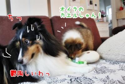 IMG_1579てんゆーり