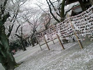 20130330靖国の桜2