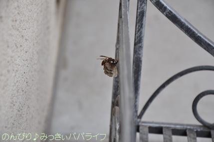 hachinosu1.jpg