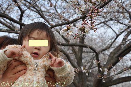 hanami20130303.jpg