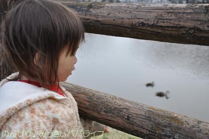 hanami20130304.jpg