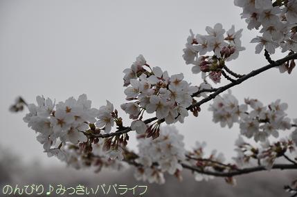 hanami20130306.jpg