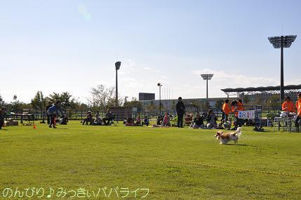 wanwansportsfes201309.jpg