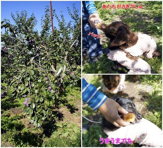 石田農園3