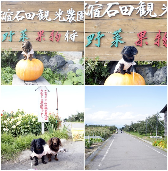 石田農園1