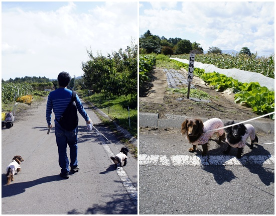 石田農園4