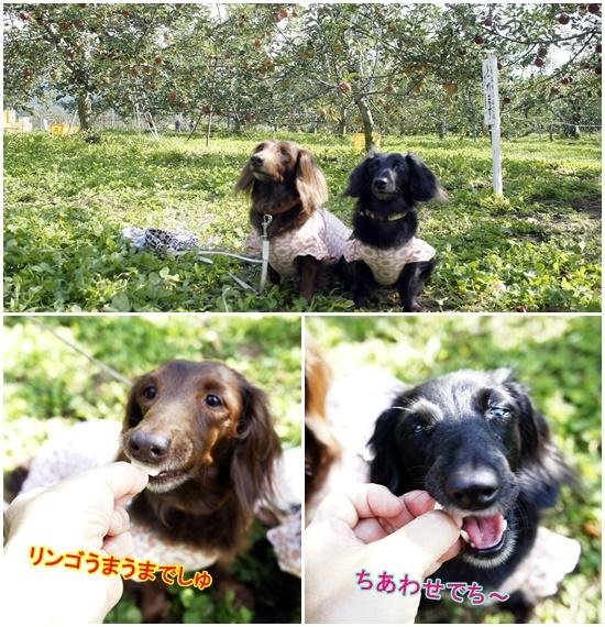 石田農園リンゴ