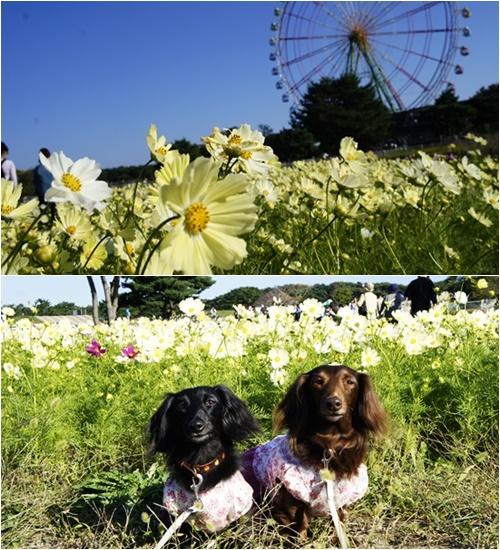ひたち海浜公園2014-6