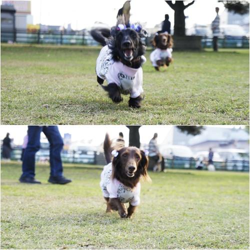 2014飛行犬4