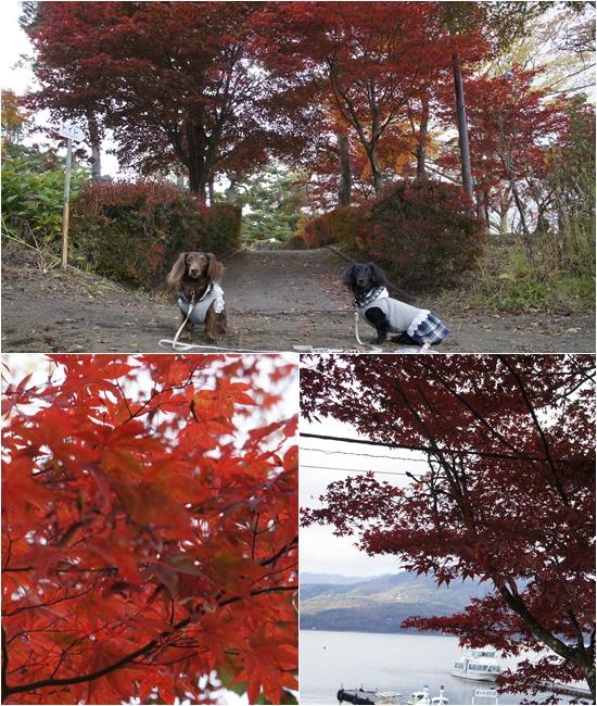 20141030山中湖1