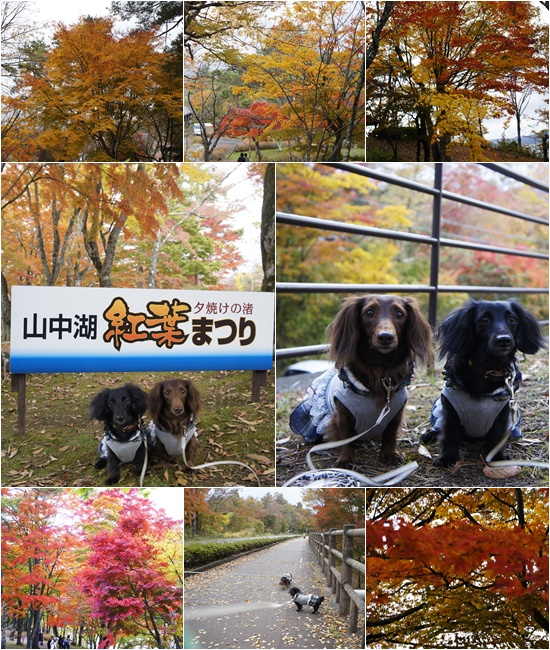 20141030山中湖3