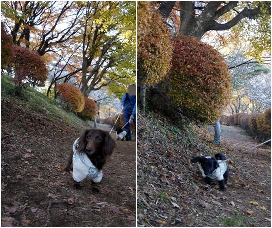 20141123fuyusakura112.jpg