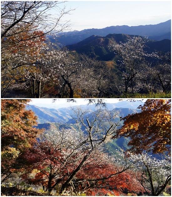 20141123sakurayama3.jpg