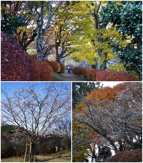 20141123sakyryama4.jpg