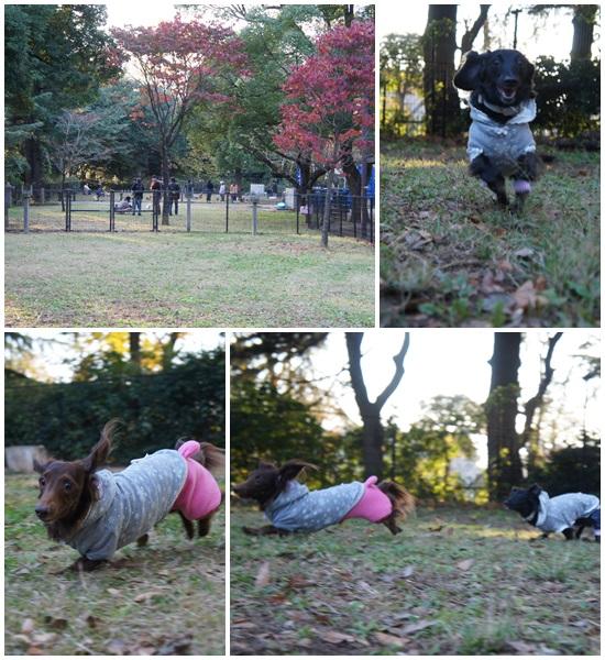 20131116 昭和記念公園