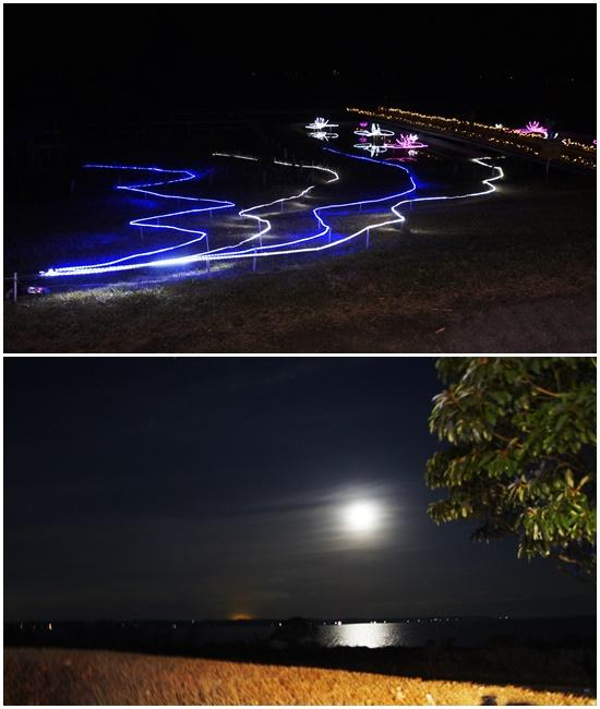 20141207水郷桜2