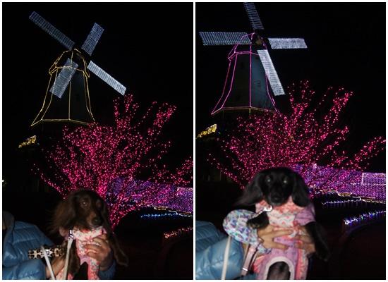 20141207水郷桜3