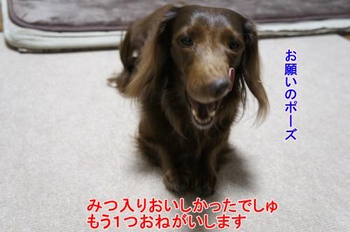 _DSC2739.jpg