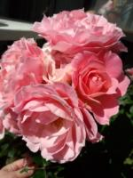 130523_花束みたいなバラ