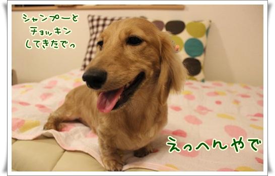 006_20131001085144281.jpg