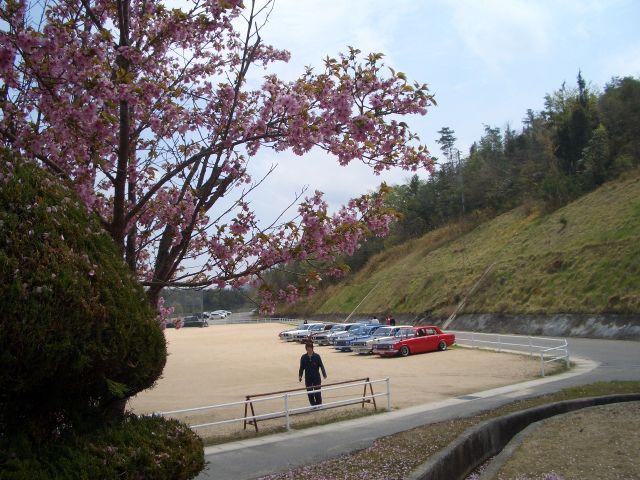 CIMG3316桜と車