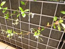 ガーデンテラスカフェ6