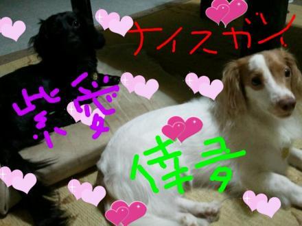 倖夛紫愛 1