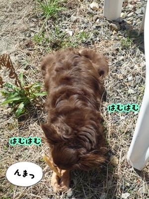 ちくP1390197