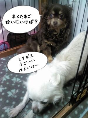 朝Picture042413_090756