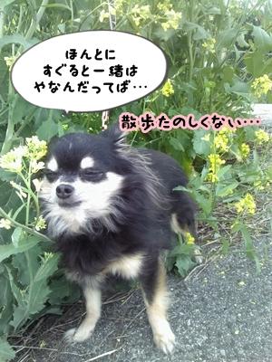 うんこPicture042313_082140