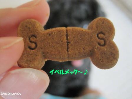 IMG_5375-cocoa_20131008214710356.jpg