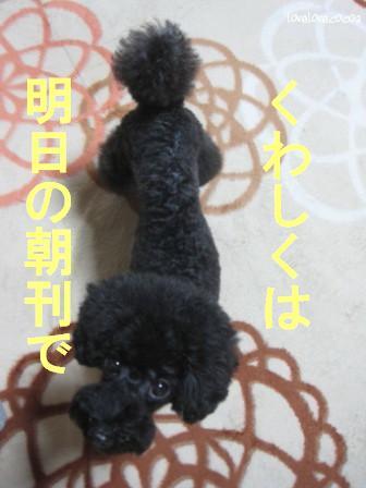 IMG_5430-cocoa_20131016210632550.jpg