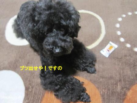 IMG_6118-cocoa_201311081141436c3.jpg