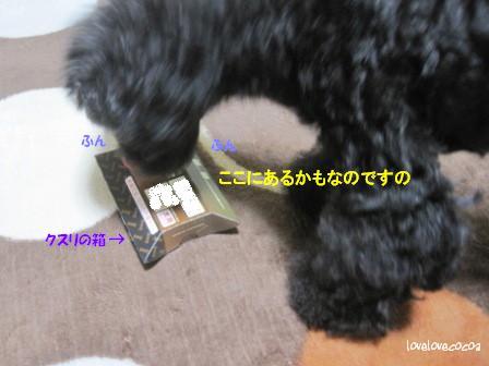 IMG_6124-cocoa_20131108114209ccd.jpg