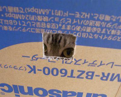 miku27_R_20110820171147.jpg