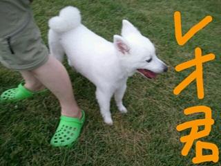 rakugaki_20110819_0001.jpeg