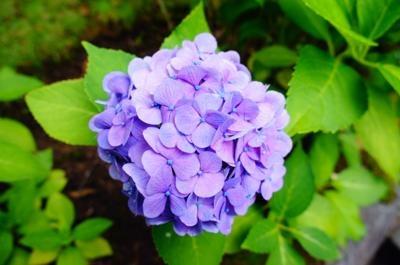 blogmimi_DSC08558.jpg