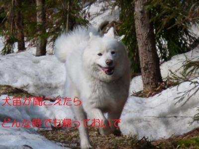 2013_0326_153344-P1100321.jpg
