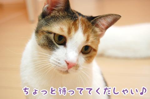 110911_ちはる