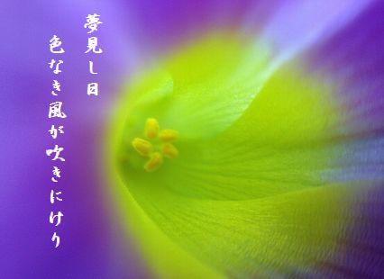 ふゆの花(オキザリス)夢見し日