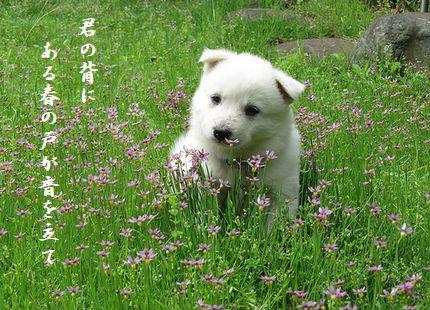 いぬと春の花君の背に