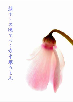 ふゆの花(ピンク)凍てつく右手