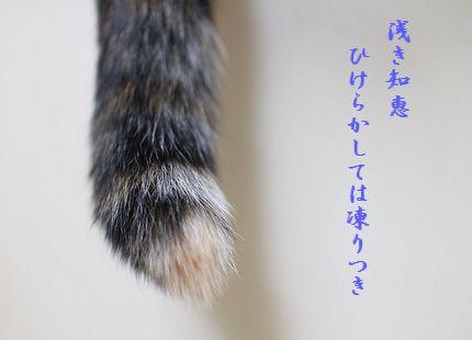 ネコ尻尾浅き知恵