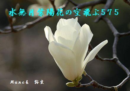 はるの花(白木蓮2)空飛ぶ