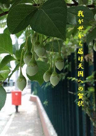 ポストと花(6月)天国への賀状