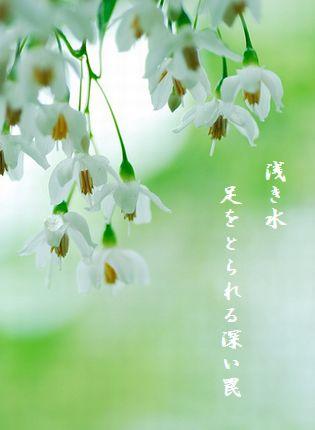 はるの花(5月)2浅き水