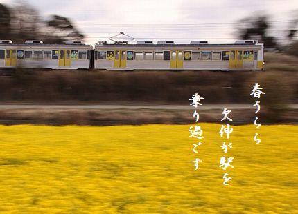 なのはなと電車春うらら